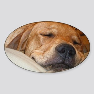 You Snooze, You Lose Sticker (Oval)