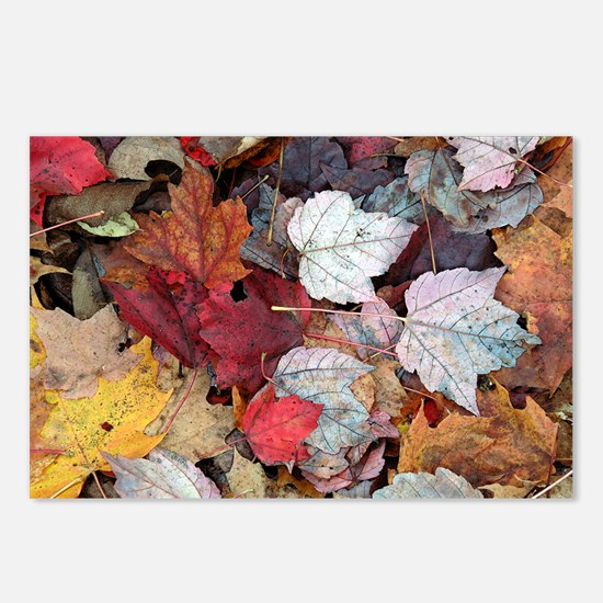Maple Leaves 308 Postcards (Package of 8)