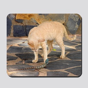 Domestic cat playing with a lizard Mousepad