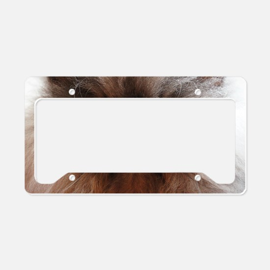 Colonel Meow smells scotch an License Plate Holder