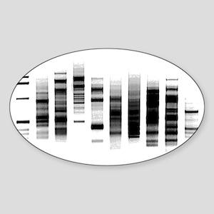 DNA Gel Sticker (Oval)