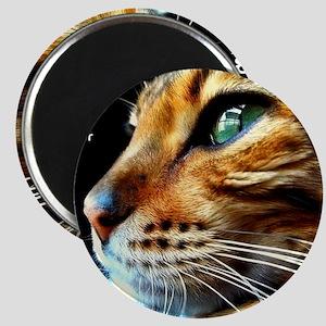 Cover Bengal Cat Close up Magnet