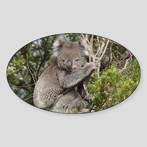 koala12 Sticker (Oval)