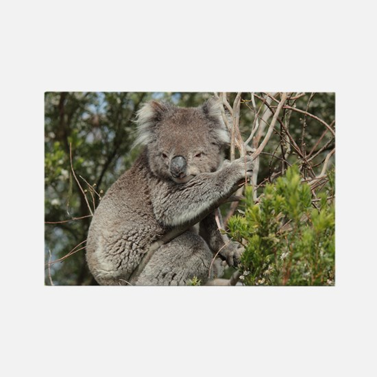koala12 Rectangle Magnet
