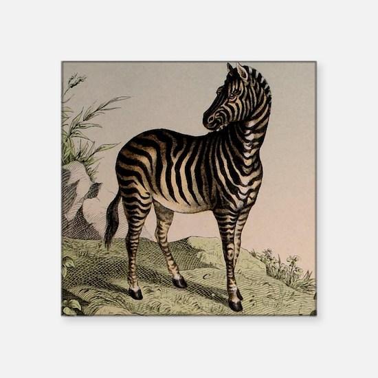 """African Zebra Square Sticker 3"""" x 3"""""""