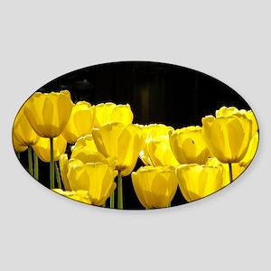 Yellow Tulips Sticker (Oval)