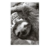 Sloth Postcards