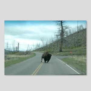 Yellowstone Buffalo Make  Postcards (Package of 8)
