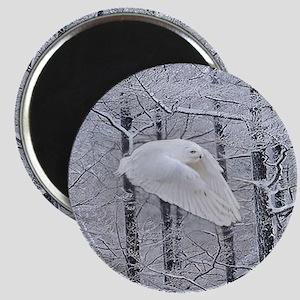 Snowy Owl, Praying Wings Magnet