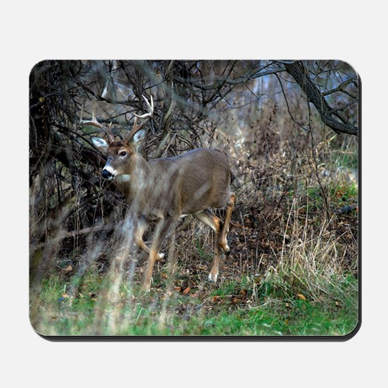 on the prowl Mousepad