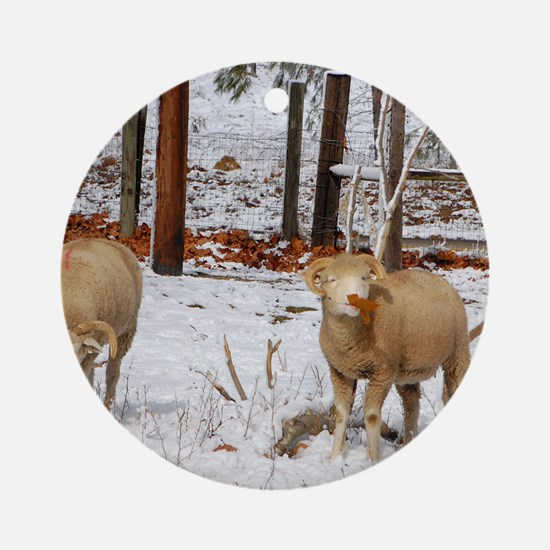 Ewes enjoying Leaves in Snow Round Ornament