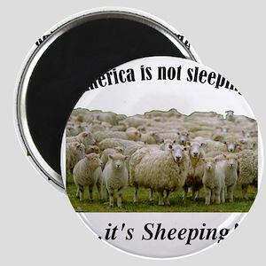 ....Sheeple! Magnet