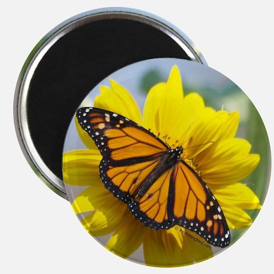 Monarch Butterfly Magnet