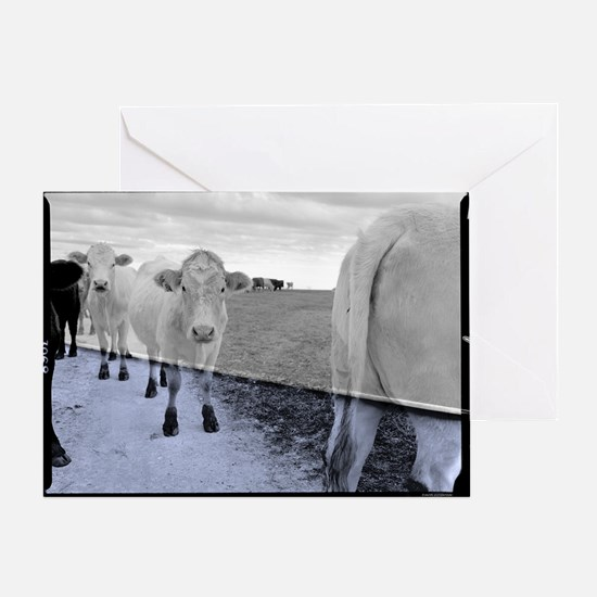 Cele Cows 001x3 Greeting Card