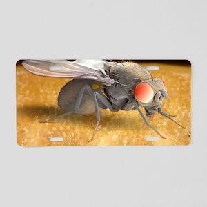 Fruit fly, SEM Aluminum License Plate
