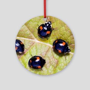 Harlequin ladybirds Round Ornament