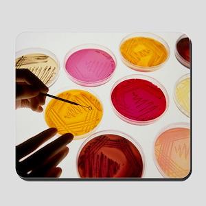 Petri dish bacterial cultures, picking a Mousepad