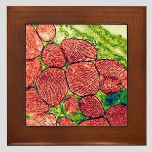 Mitochondria, TEM Framed Tile