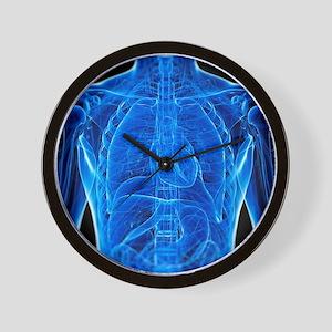 Male anatomy, artwork Wall Clock