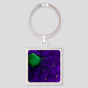 Macrophage attacking bacteria, art Square Keychain
