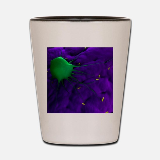 Macrophage attacking bacteria, artwork Shot Glass