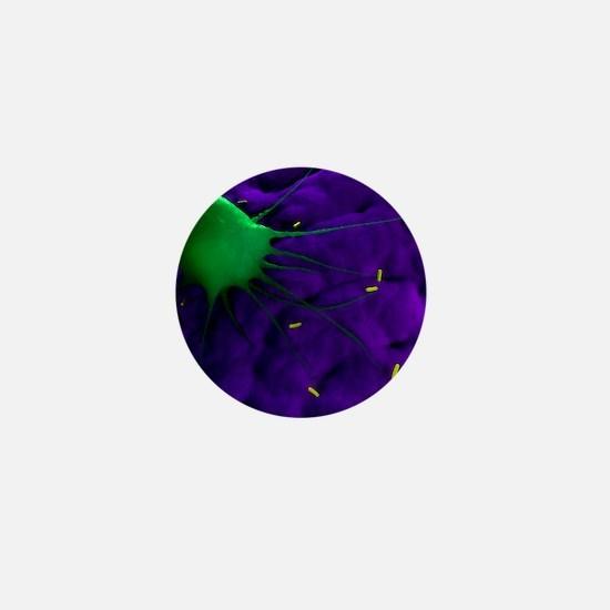Macrophage attacking bacteria, artwork Mini Button