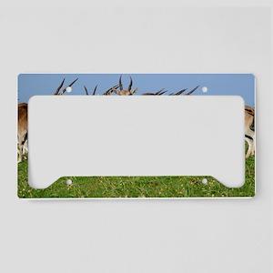 Eland antelope herd License Plate Holder