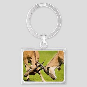 Eland antelopes sparring Landscape Keychain