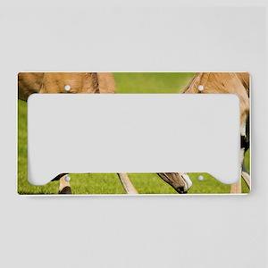 Eland antelopes sparring License Plate Holder