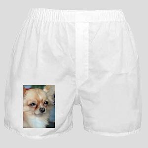 i love dog Boxer Shorts