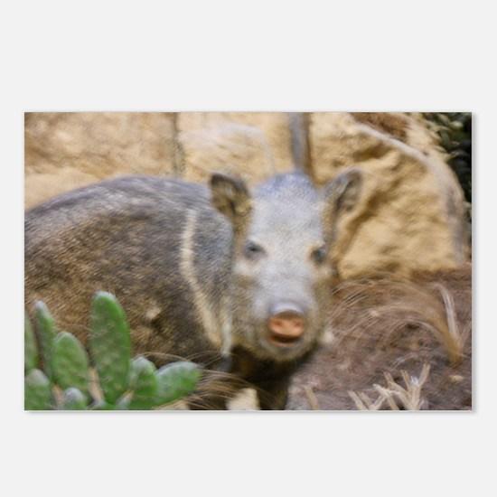 Wild Boar Postcards (Package of 8)