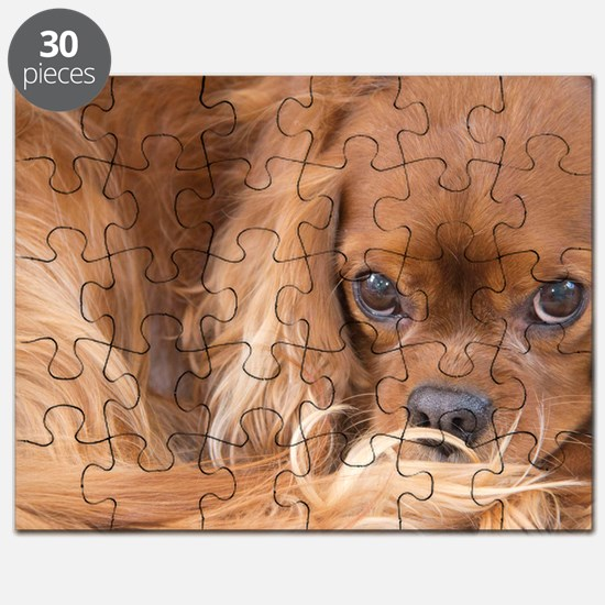 Sweet Friend Ruby Cavalier King Charles Spa Puzzle