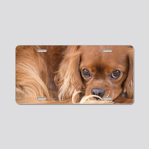 Sweet Friend Ruby Cavalier  Aluminum License Plate