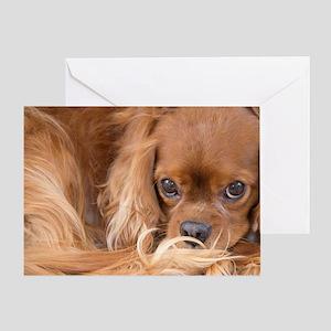 Sweet Friend Ruby Cavalier King Char Greeting Card
