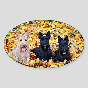 Autumn Scottish Terriers Sticker (Oval)