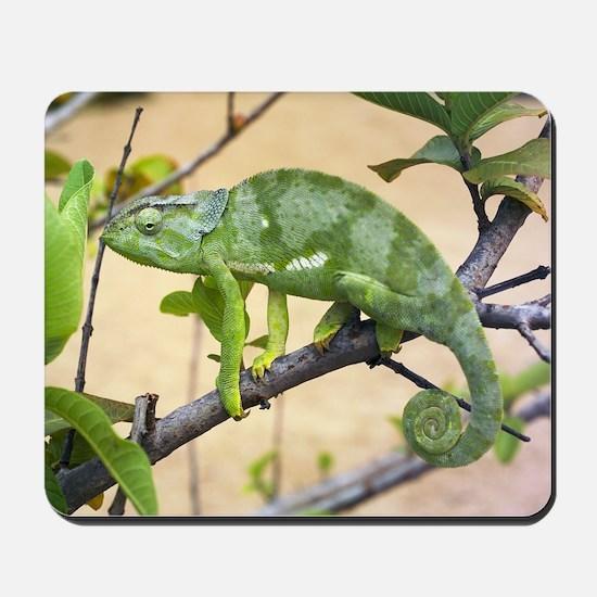 Flap-necked chameleon Mousepad