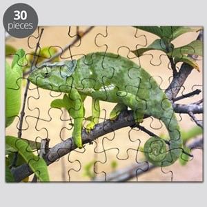 Flap-necked chameleon Puzzle