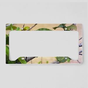 Flap-necked chameleon License Plate Holder