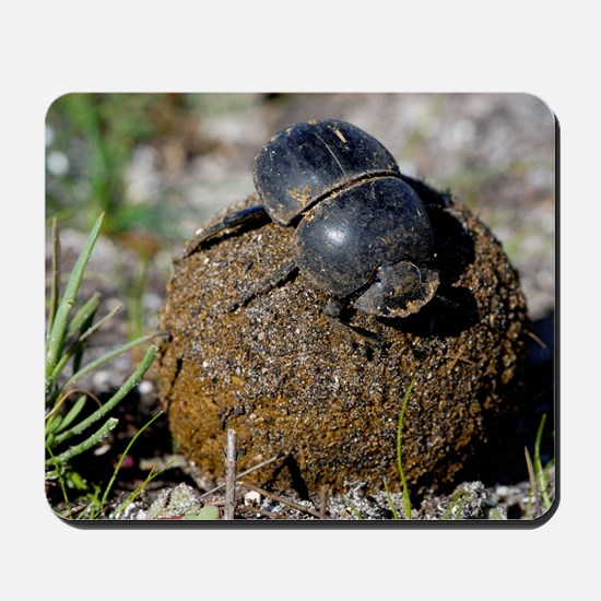 Flightless dung beetle with dung ball Mousepad