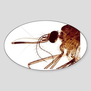 Female mosquito head, light microgr Sticker (Oval)