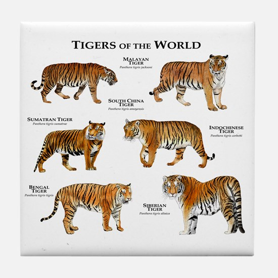 Tigers of the World Tile Coaster