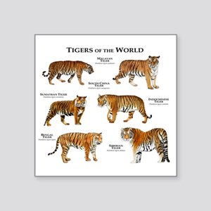 "Tigers of the World Square Sticker 3"" x 3"""