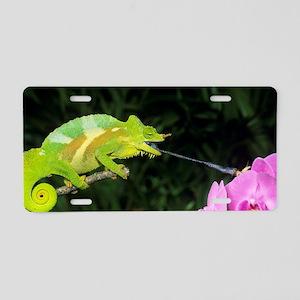 Four-horned chameleon Aluminum License Plate