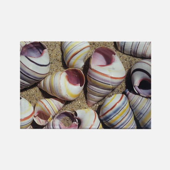 Freshwater snail shells Rectangle Magnet