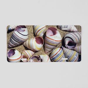 Freshwater snail shells Aluminum License Plate