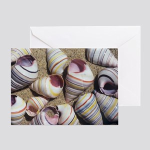 Freshwater snail shells Greeting Card