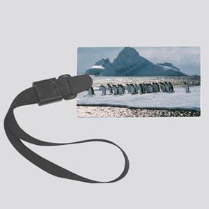 Gentoo penguins Large Luggage Tag