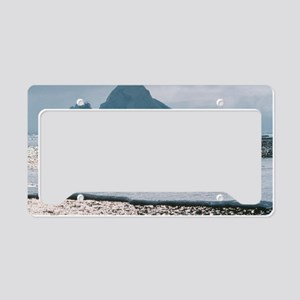 Gentoo penguins License Plate Holder