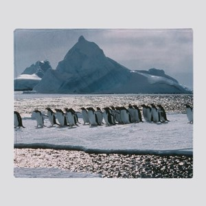 Gentoo penguins Throw Blanket