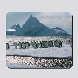 Gentoo penguins Mousepad